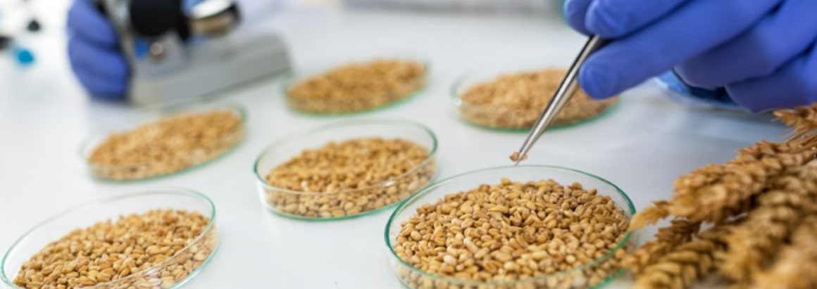 cereals and pulses testing